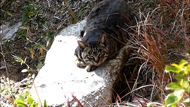 半島の猫 第三話