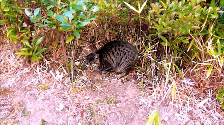 半島の猫 第二話