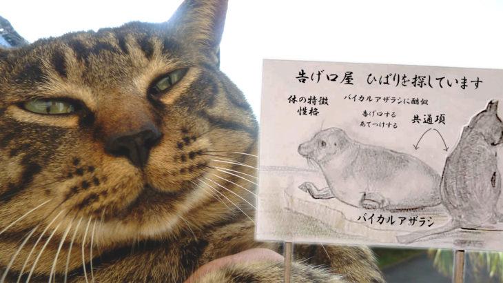 写真館 お尋ねネコより〜