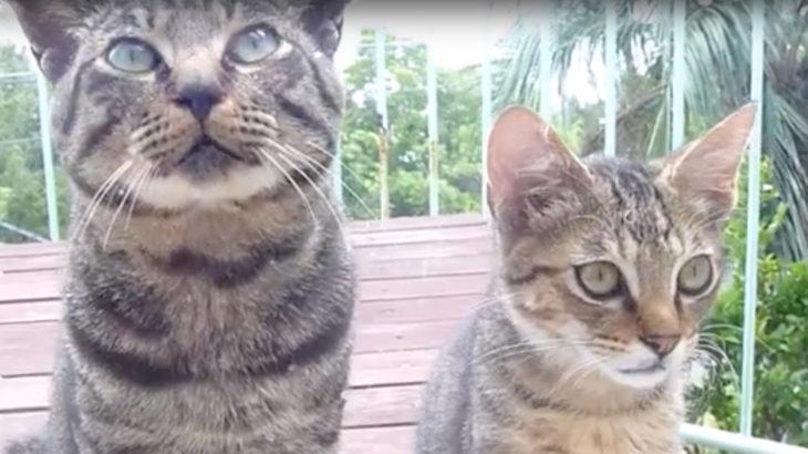 動画ひばり猫