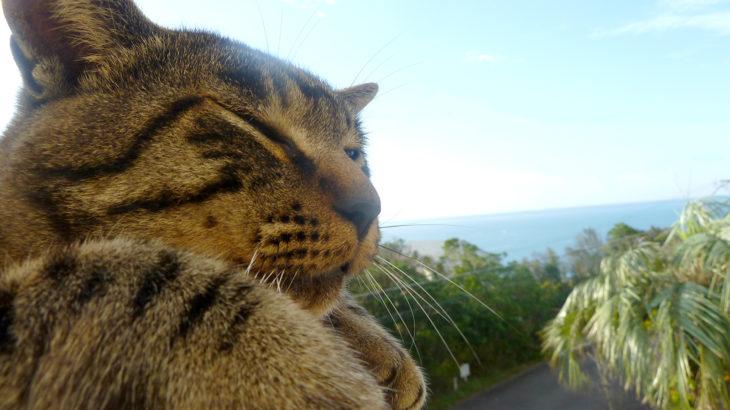 宇宙と猫の律動