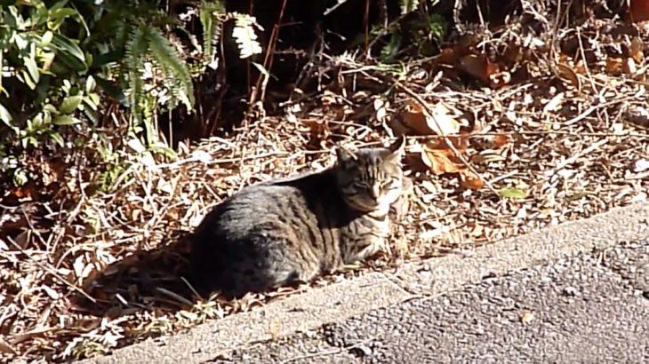 人と猫たちのいい関係が垣間見られる半島の午後 ひばり物語シーズン2 第八話