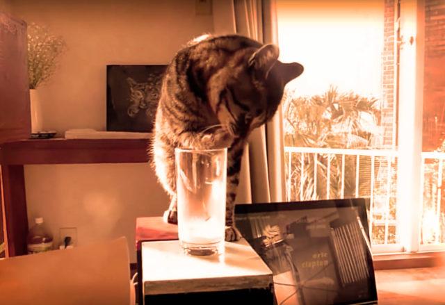 ネコの礼儀作法より〜