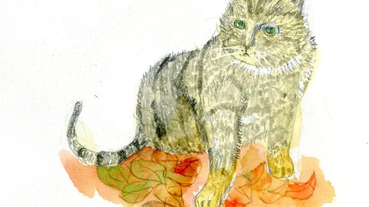 半島の猫29話