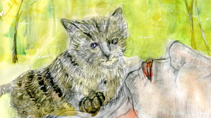 半島の猫31話
