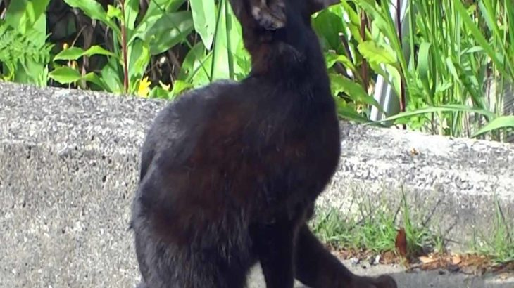 おいらの一押の黒ネコちゃん!